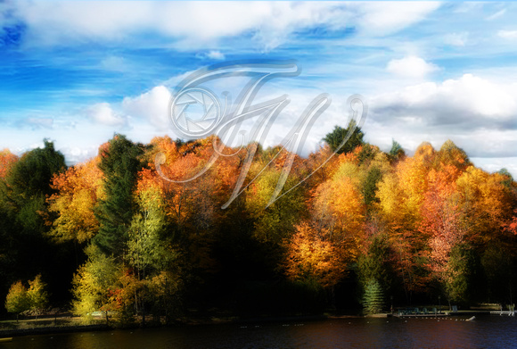 Fall Trees, Tupper Lake, NY